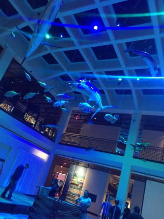 Setting up on Day 2 - Houston Museum of Natural Science